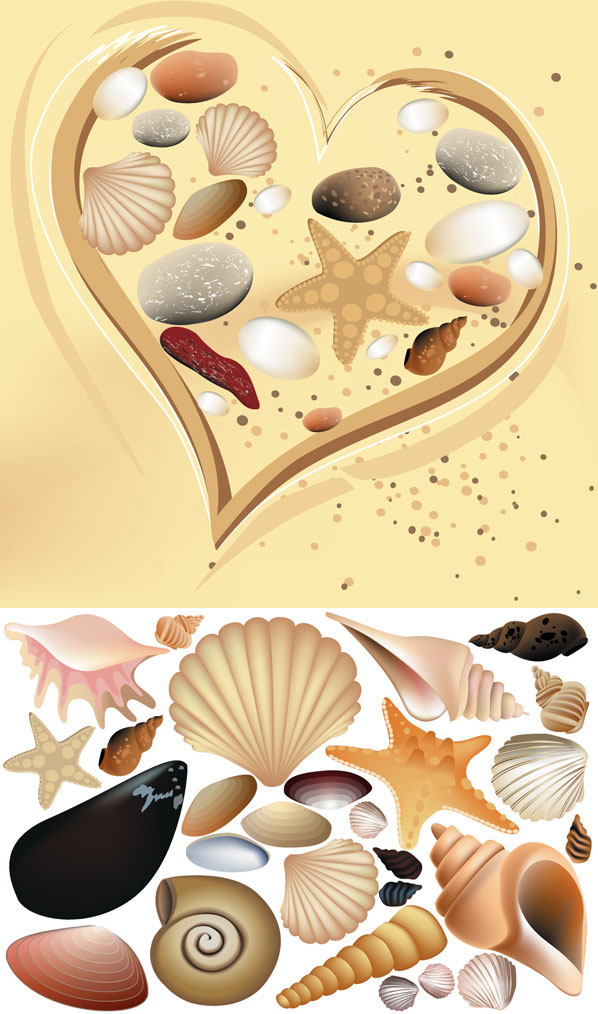 Vector coquille color��e